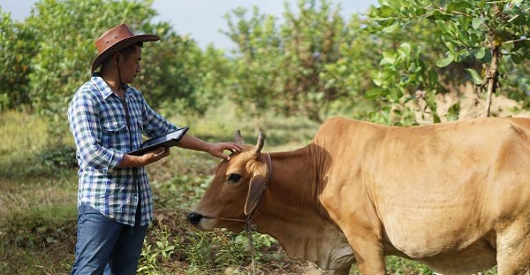 Inovação permite rastreabilidade da cadeia produtiva agropecuária.jpg